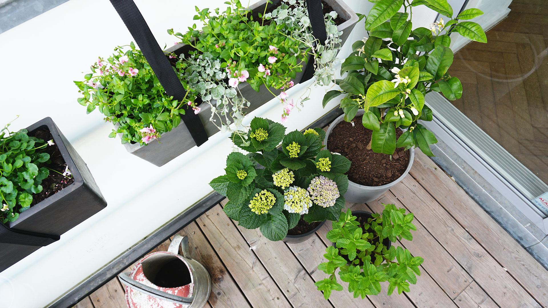 Greenify planter på altan i København